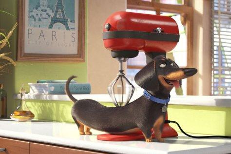 secret-life-of-pets-movie-review-2016-hannibal-burress
