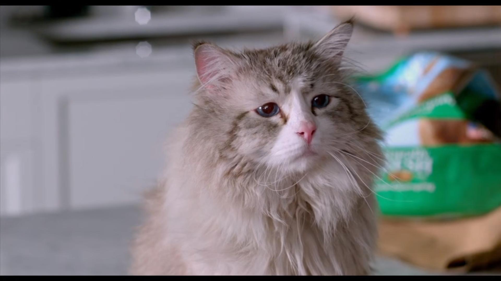 Nine lives 2016 movie : Murder in the first 2014 online subtitrat