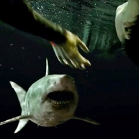 47 Meters Down: Uncaged (2019) Movie Review